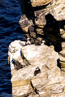 Puffins at Brough of Birsay (2)